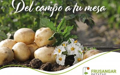 Comenzamos a comercializar la campaña 2021 de patata nueva nacional