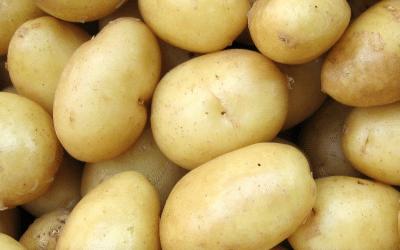 Características de la patata Soprano